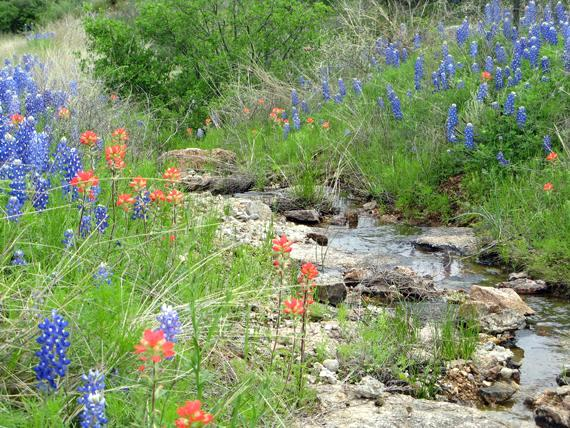Hill Country Stream