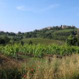 San Antimo Vinyard